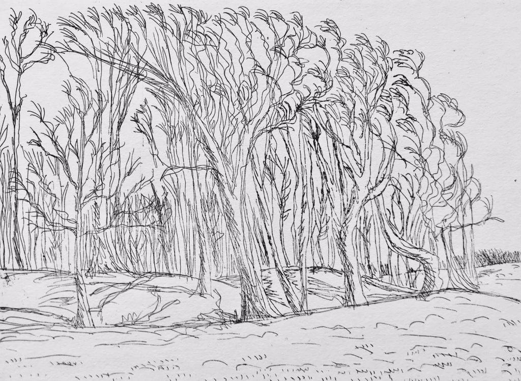 trees at chanctonbury ring